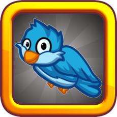 Activities of Brave Blue Bird