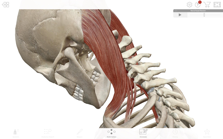 Screenshot do app Human Anatomy Atlas 2019