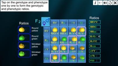 Dihybrid cross screenshot 9