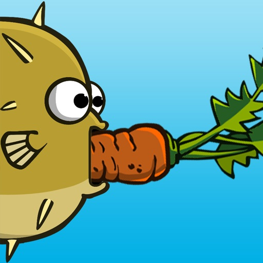 Puffer Fish Eating Carrot