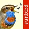 Vogelstimmen Id - Rufe,Gesänge