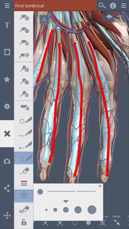 Forearm & Hand: 3D Real-time screenshot-4
