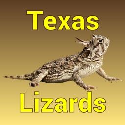 Texas Lizards