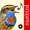 Mullen & Pohland GbR - Bird Song Id UK artwork