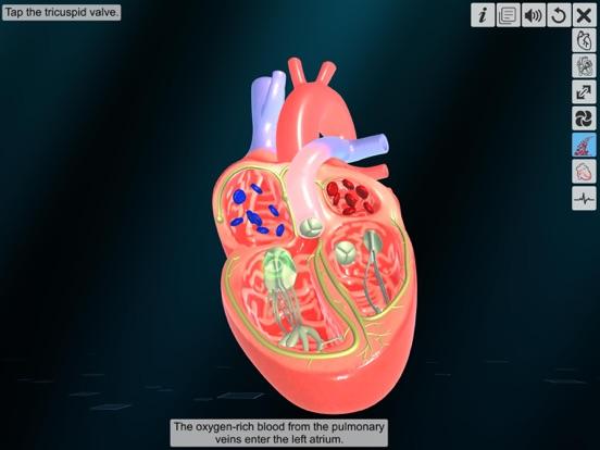 Heart - An incredible pump screenshot 12