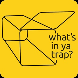 What's in your trap?