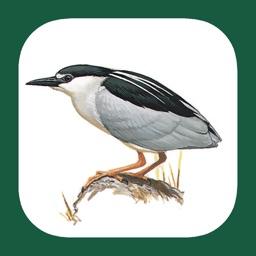 Benelux Bird Identification