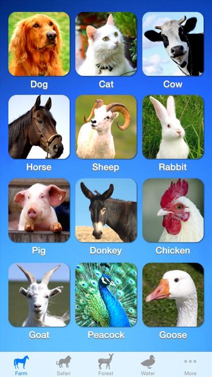ZOOLA Animals