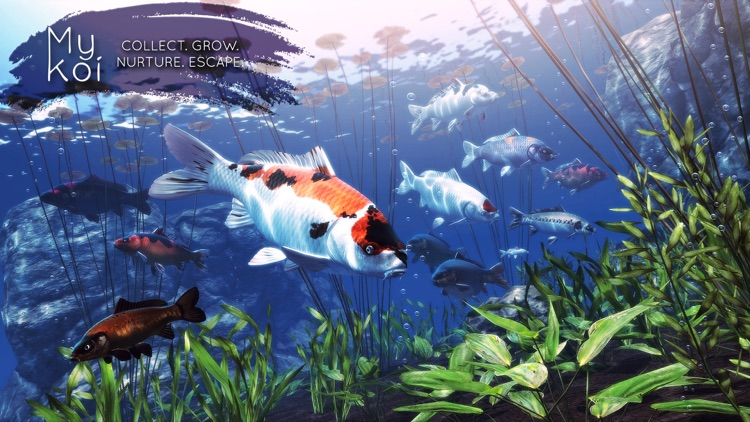 My Koi screenshot-0