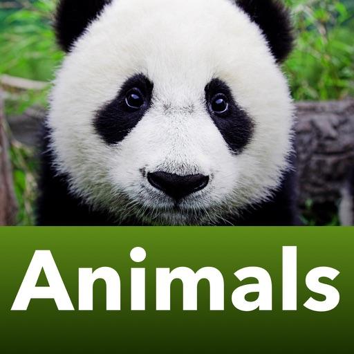Животные - домашние и дикие