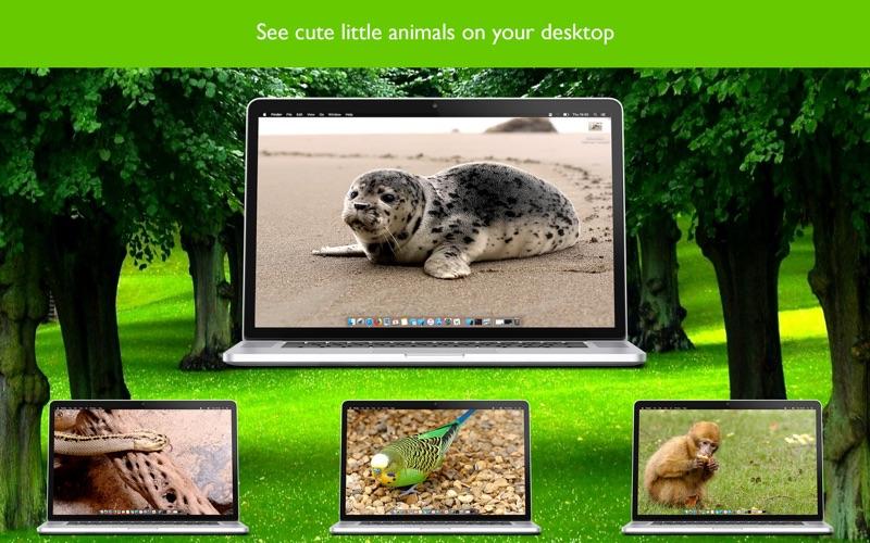 Animal Animated Wallpapers for Mac
