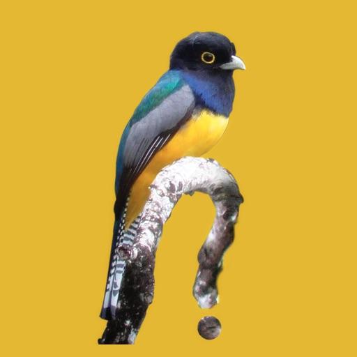 Belize Birds Field Guide