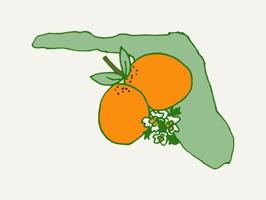 Florida Doodles