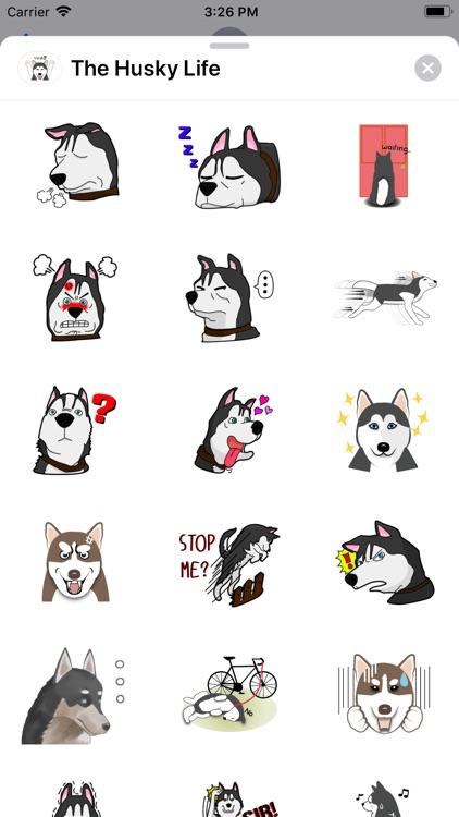 The Husky Life