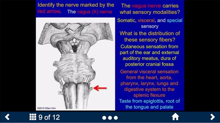 Neuroanatomy - SecondLook screenshot-3