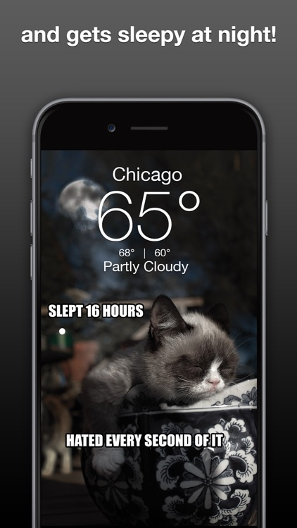 Grumpy Cat's Funny Weather screenshot-2