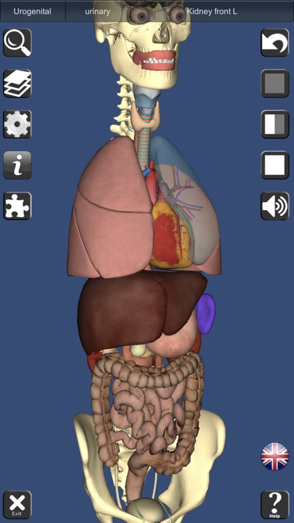 3D Anatomy screenshot-7