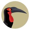 High Branching cc - BirdPro Kruger National Park artwork