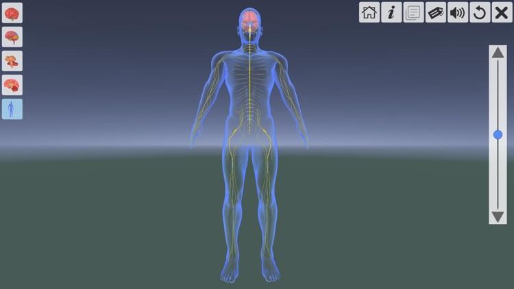 AR Human brain screenshot-6