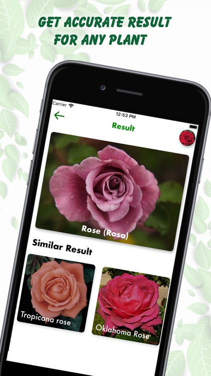 Plant Identification Lite