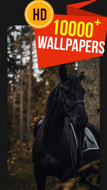 Beautiful HD Horse Wallpapers