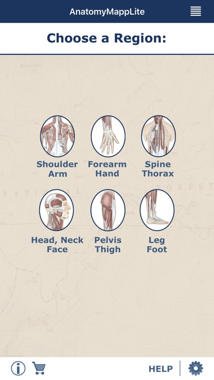 AnatomyMapp Lite