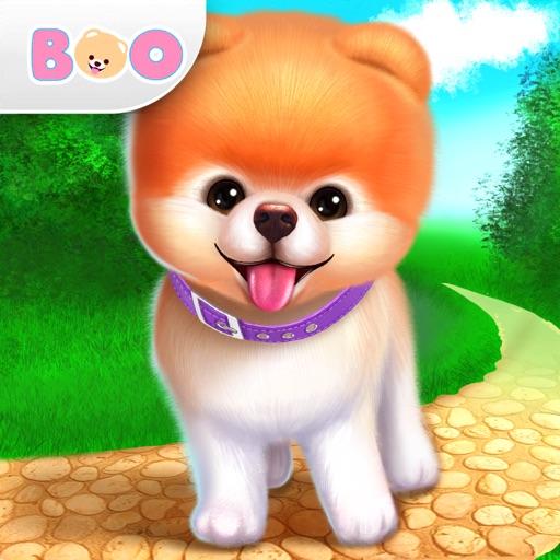 Boo: der süßeste Hund der Welt