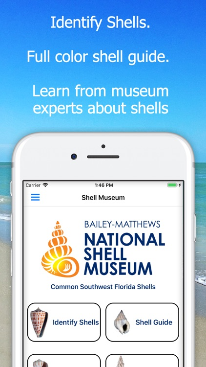 Shell Museum: Identify Shells screenshot-0