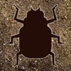 Bugging Out - Shooting Bugs