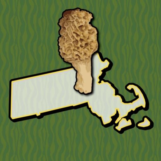 Massachusetts Mushroom Forager