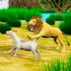 Activities of Massai VS Lion