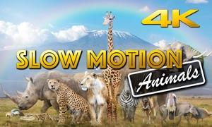Slow Motion Animals 4K