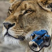 Hidden Objects: Animals