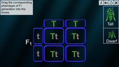 Monohybrid Cross screenshot 5