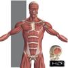 Education Mobile - Visual Anatomy  artwork