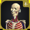 3D運動解剖学 teamLabBody-TEAMLABBODY.inc