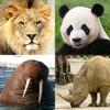 動物クイズゲーム : 動物園全体の日本と世界の動物