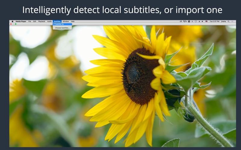 Media Player Screenshot