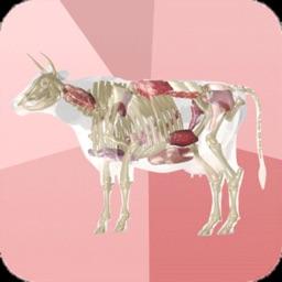 Beef Cuts 3D