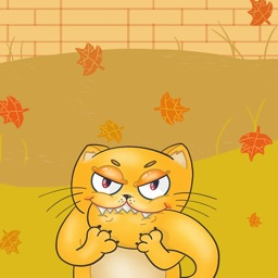 Handsome little yellow cat
