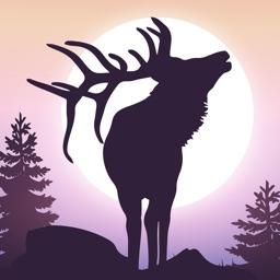Elk Hunting Calls for Hunters