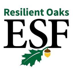 Resilient Oaks