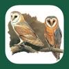 UK Ireland Bird Identification