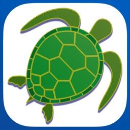 Tortoise Music Slow-Mo