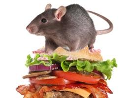Burger Rats