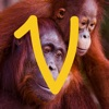 点击获取Virry game: Learn wild animals