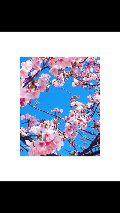 White Background Frame screenshot 3