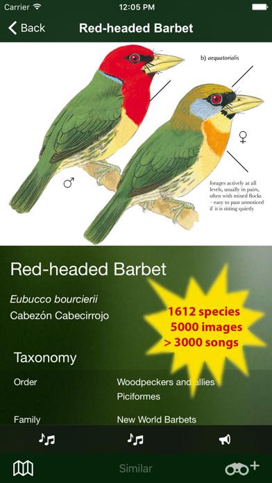 All Birds Ecuador field guide Screenshot