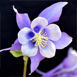 Colorado Wildflower Search