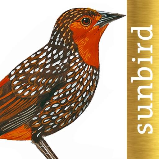 All Birds North. South America